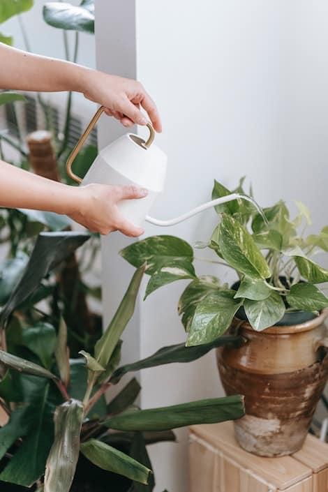 DUUO employee watering a plant